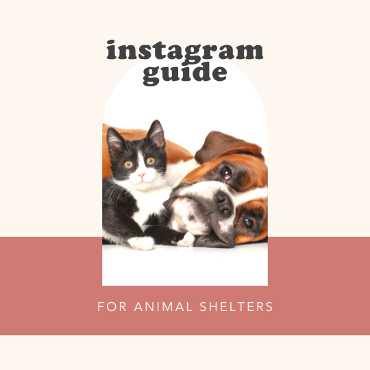 animal shelter freebie cover